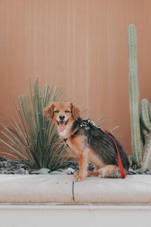 The Westin Lake Las Vegas - Pet Friendly Hotel - thecasualfree.com